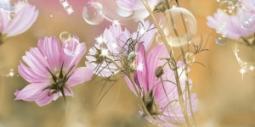 Декор Нефрит-керамика Эльза 04-01-1-10-04-85-165-2 50x25 Розовый